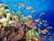 Coral Reef, Southern Red Sea, Near Safaga, Egypt
