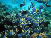 Maldivs-2