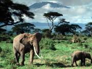 Tanzania-12