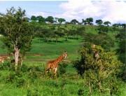 Tanzania-5